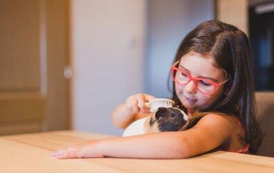 Guinea Pig Temizliği Nasıl Yapılır?