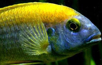 Akvaryum Balıklarında Karşılaşılan Hastalıklar