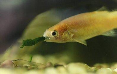 Balıklar İçin En İyi Yemler